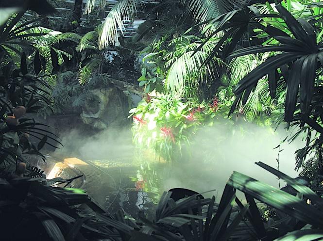 Amazon - Jungle