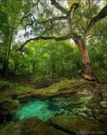 Florida Spring