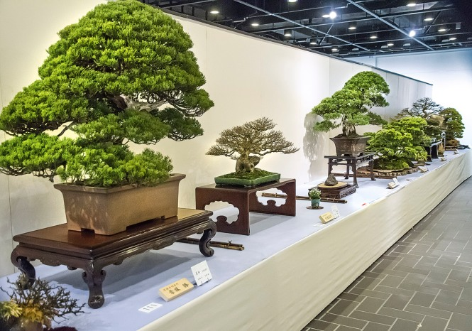 japan International Bonsai Tour
