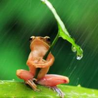 Why is nature amazing? Look at this little frog