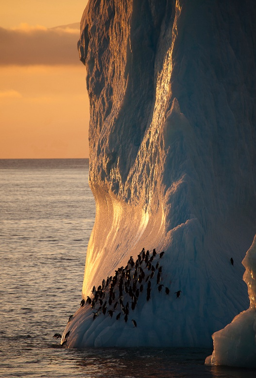 Penguins -Antarctica