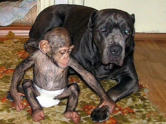 This dog gave the chimp the mother he needed