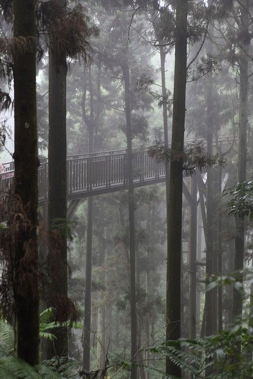 Forest Skywalk, Taiwan