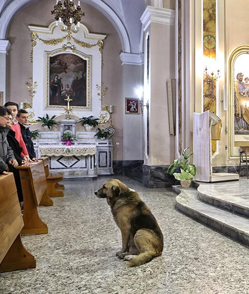 dog-goes-to-church