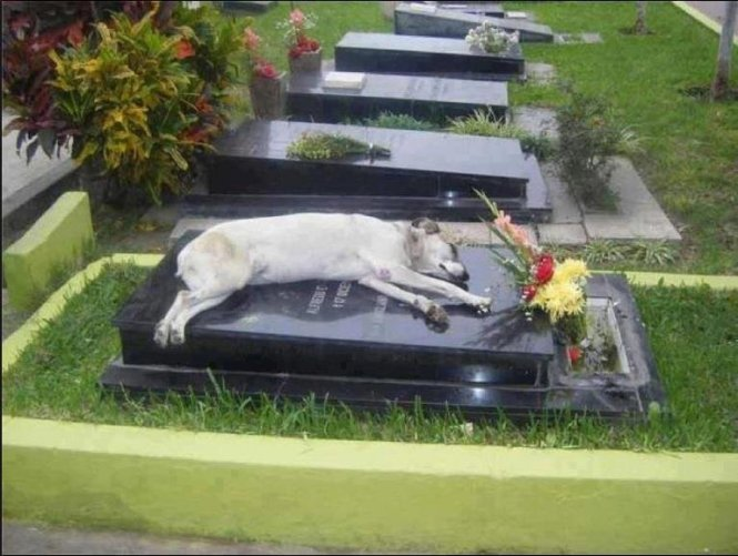 3. A dog stays on the grave of his deceased owner. He was there for hours.