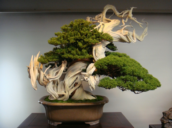 Japan Bonsai Tour
