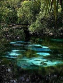 Hammock Springs, Florida
