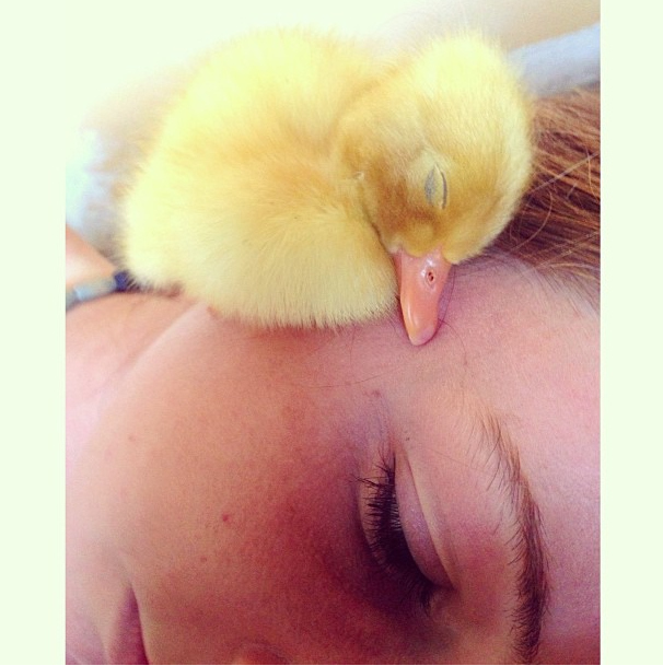 A BABY DUCK TAKING A NAP ON A CHEEK