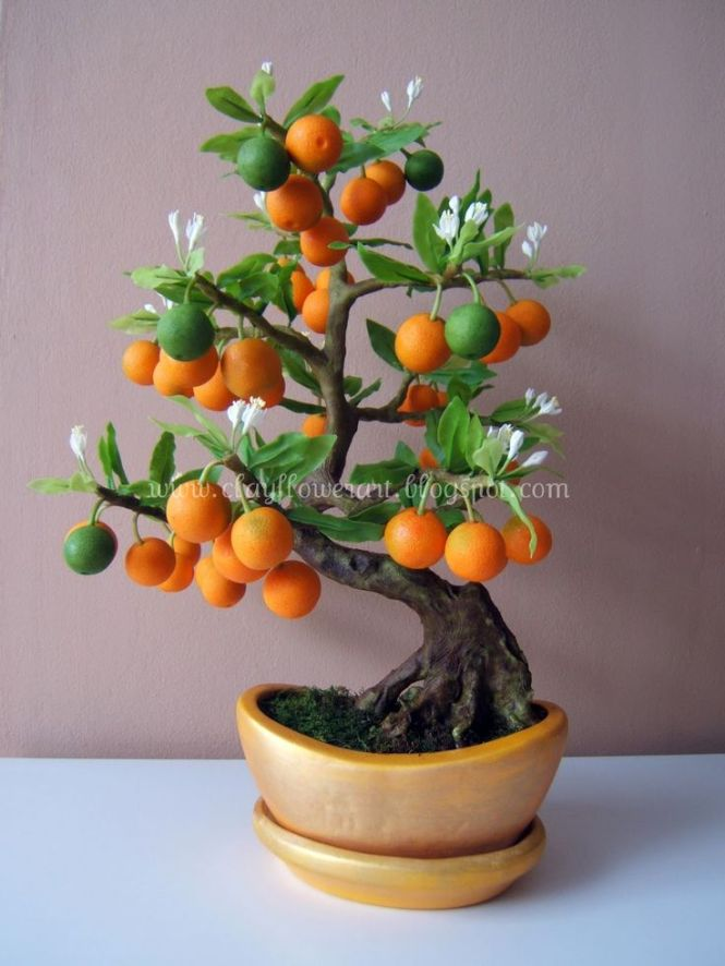 Orange Bonsai
