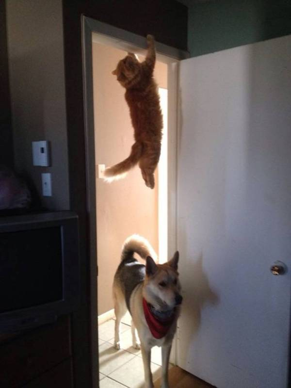 Funny - Cat and Dog