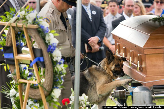 Fallen Bardstown police officer Jason Ellis' partner Figo, center, pays his last respects