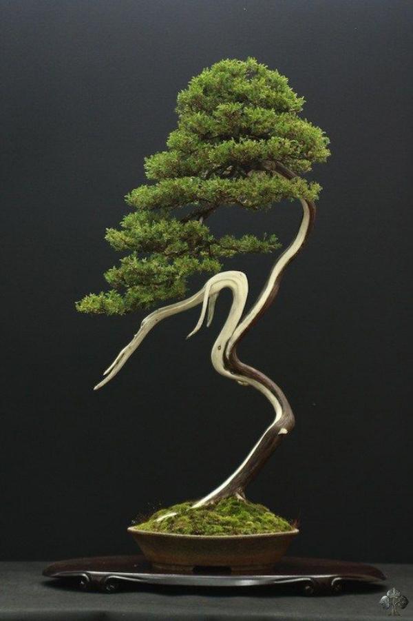 Sunset on bonsai gallery amazing nature for Literati bonsai gallery
