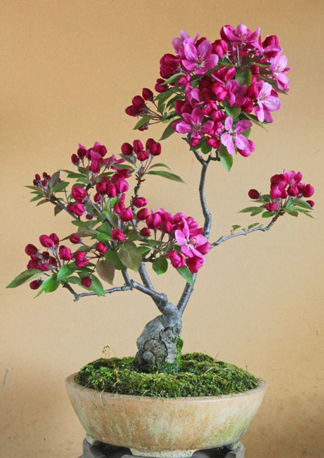 Sunset on bonsai gallery amazing nature for Bonsai de jardin