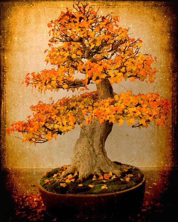 Fall Bonsai Tree