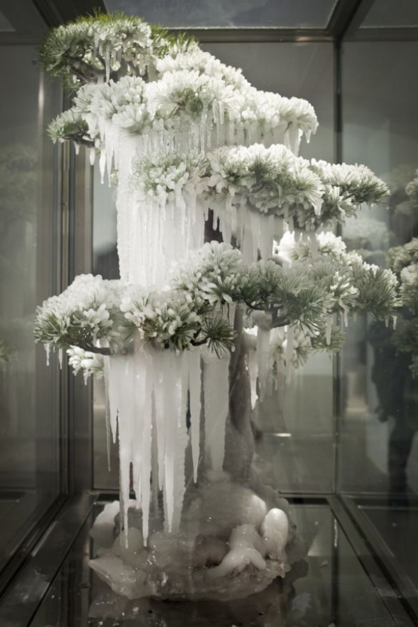 In 'Frozen Bonsai', a new work commissioned for the exhibition, Makoto sprays a bonsai pine tree with instant freeze and presents this in a transparent fridge. As the ice slowly drains the colour from the bonsai tree, the tree dies - but its beauty is preserved in optimal conditions.