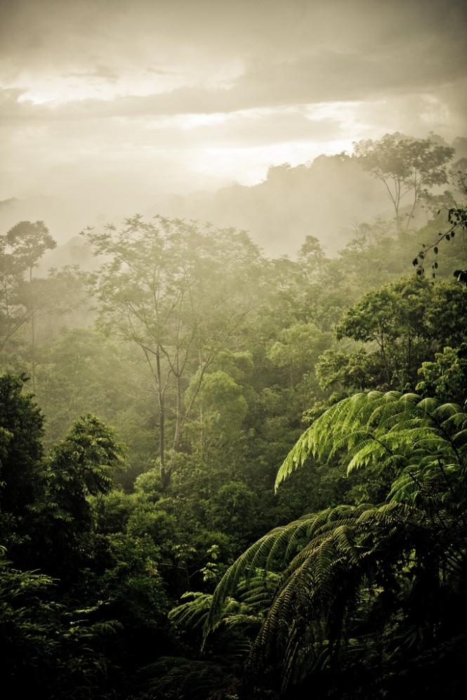 Costa Rica - Nauyaca