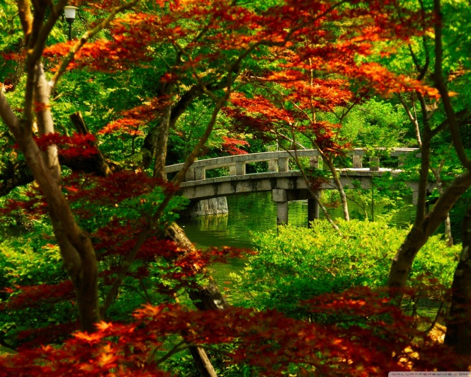 Japanese Garden Kyoto