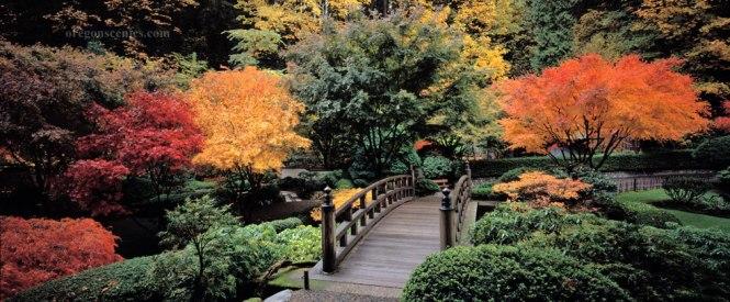 Japanese Garden pond in spring