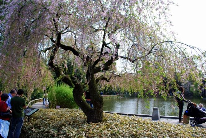 Brooklyn Botanic Garden, located at 1000 Washington Avenue in Brooklyn, New York
