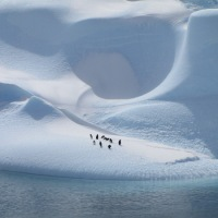 Natural World, Penguins