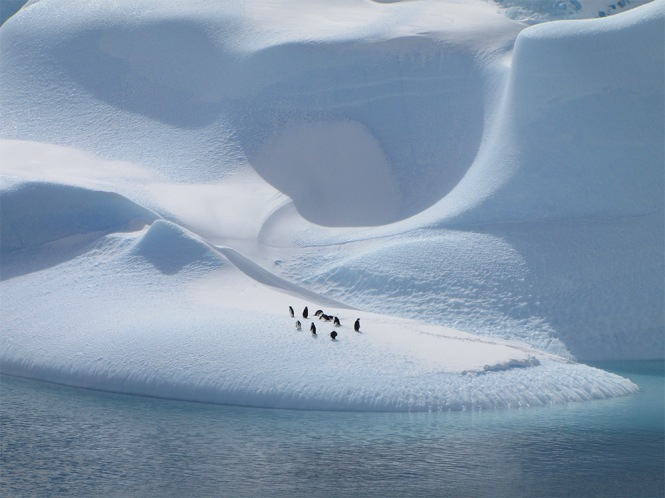 Natural World. Penguins