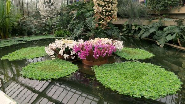 Kew Royal Botanic Gardens – Orchids