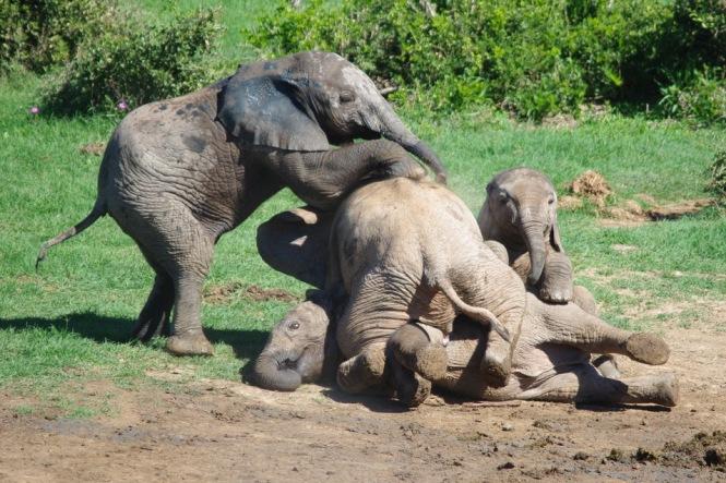Elephant Pile Up