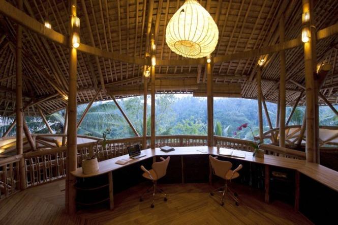 Bamboo 11