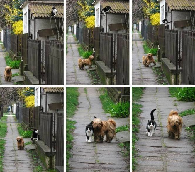 Everyday at the same time, she waits for him and they go for a walk!