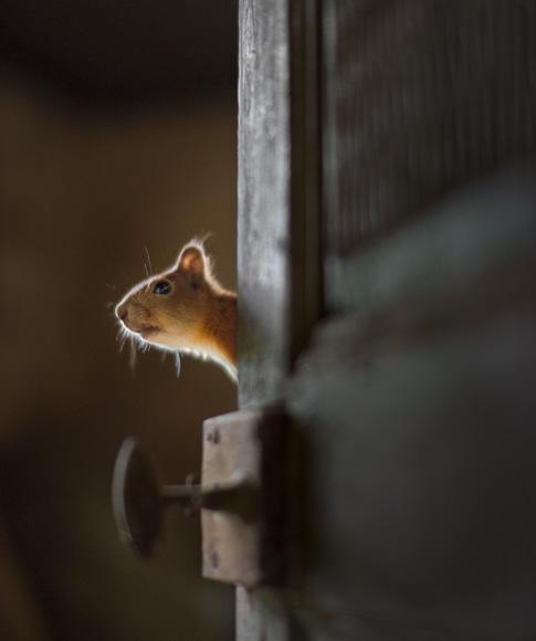 squirrel-poking-at-door