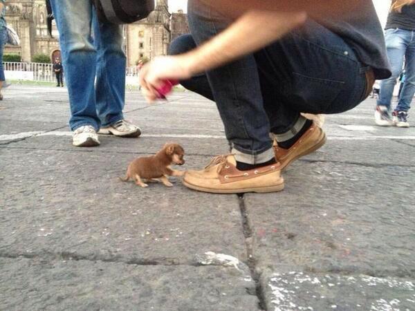 Cutest Small Dog