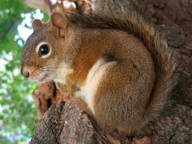 Cute squirrel