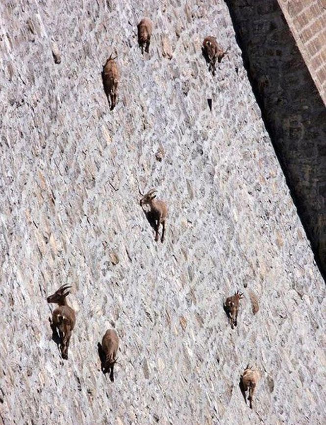 goats_on_dam_03%255B1%255D[1]