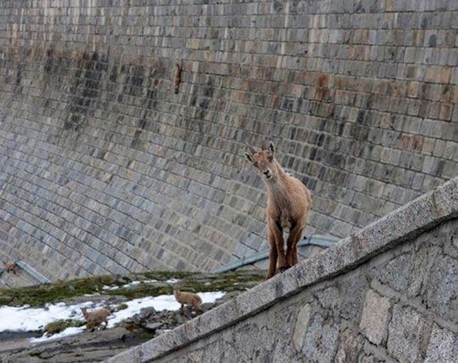 goats_on_dam_05%255B1%255D[1]